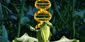 DNA-From-Genetically-Modified-Crops-Can-Be-Transferred-Into-Humans-Who-Eat-Them