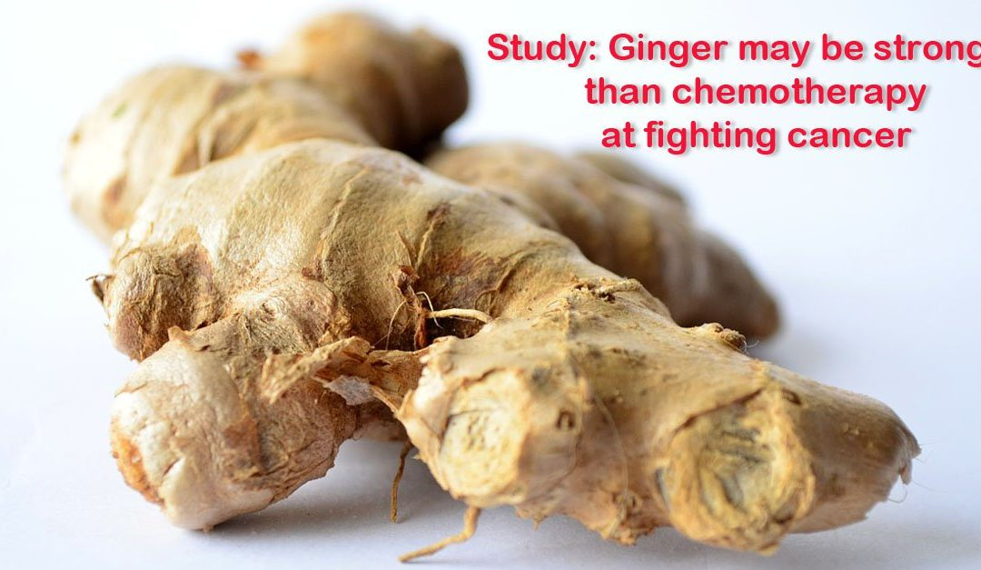 Ginger Could Be More Powerful Than Chemotherapy