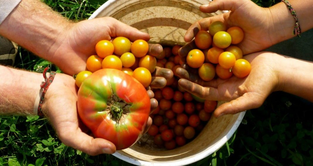 New Study: Eating Organic Foods Reduces Your Risk Of Getting Cancer