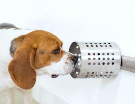Study shows dogs can accurately sniff out cancer in blood